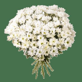 Букет из 15 веток белых хризантем