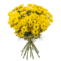 Букет из 15 веток желтых хризантем