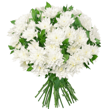 Букет из 19 веток белых хризантем